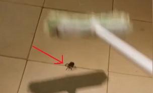 עכביש מפתיע (צילום: יוטיוב)