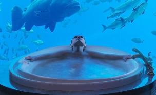 דובאי, מלון אטלנטיס 3 (צילום: atlantisthepalm.com)