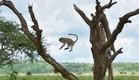ספארי בטנזניה (צילום: יאיר חייטמן)