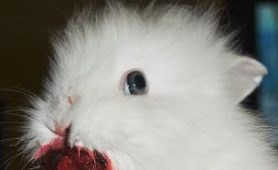 חיות אוכלות תותים (צילום: boredpanda.com)
