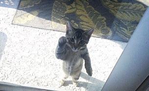 רוצות להכנס (צילום: boredpanda.com)