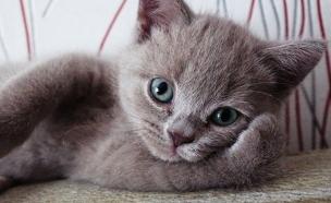 חיות עושות פוזות (צילום: boredpanda.com)