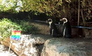 מצעד הגאווה של הפינגוויניות בספארי, היום