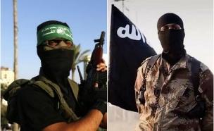 חמאס ודאעש (צילום: twitter)