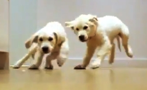 כלבלבים (צילום: חדשות 2)