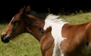סוס על סוס (צילום: rossparry.co.uk)