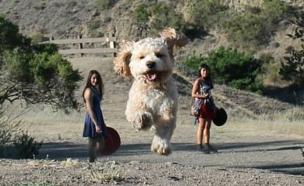 כלבים ענקיים (צילום:  boredpanda.com)