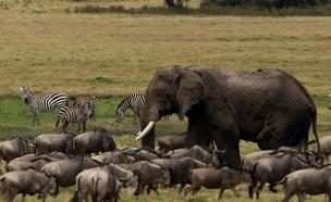 כמה עולה לצוד חיות בר באפריקה? (צילום: רויטרס)