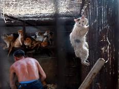 פסטיבל יולין (צילום: Washington Animal Rescue League)
