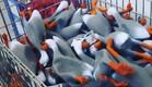 צבא הברווזים (צילום: צילום מסך ,מעריב לנוער)