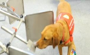 הכלבים שיודעים לזהות תאים סרטניים
