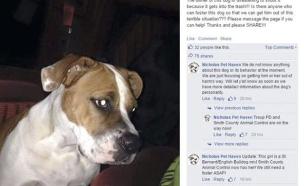 ביקשה לירות בכלבה (צילום: פייסבוק)
