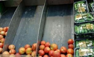 מדפי העגבניות ריקים - סניף שופרסל תל אביב (צילום: אייל טואג ,TheMarker)