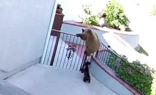 צפו בהסתערות הכלבה על הדובים (צילום: יוטיוב)