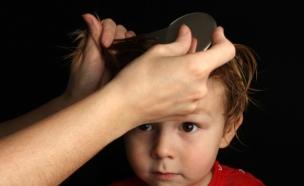 ילד שבודקים לו כינים - כינים (צילום: istockphoto ,istockphoto)