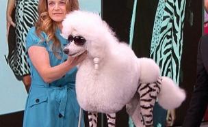כלבה מחופשת לקים קרדשיאן אצל ג'ימי קימל (צילום: יוטיוב  ,יוטיוב)