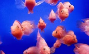 מה עושים עם הרבה דגים? (צילום: Thinkstock ,thinkstock)