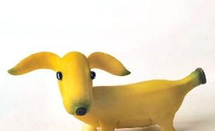 כלב מבננה (צילום: צילום מסך ,מעריב לנוער)