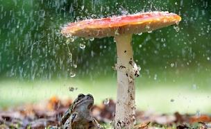 פטריה בגשם (צילום: Tim Gainey/Alamy)