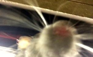 סלפי חולדה (צילום: יוטיוב)