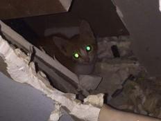 חתולים בקיר (צילום: עומר ברק)