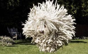 ביסט הכלב של צוקרברג (צילום: מתוך הפייסבוק של מארק צוקרברג)