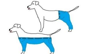 מכנסיים על כלב (איור: מתוך הפייסבוק Utopian Raspberry - Modern Oasis )