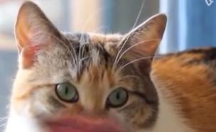 חתול שפתיים (צילום: צילום מסך ,מעריב לנוער)