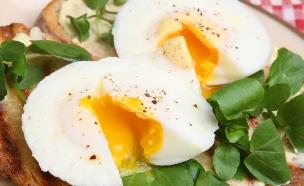 ביצים עלומות (צילום: Joe Gough, shutterstock/ שאטרסטוק )