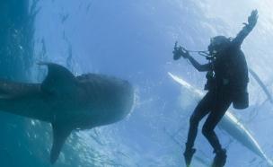 צוללים עם כרישים? זה הזמן להפסיק (ארכיון) (צילום: רויטרס)