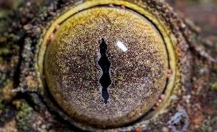 של מי העין (צילום: נשיונל ג'יאוגרפיק)