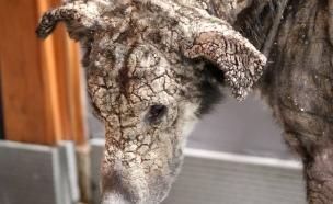 כלבת אבן (צילום: וליה אורפנידו)
