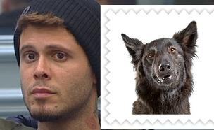 לאיזה כלב אתם דומים