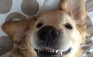 כלב עם גשר (צילום: distractify ,מעריב לנוער)