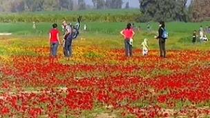 המלצות לטיולים בפריחה (צילום: חדשות 2)