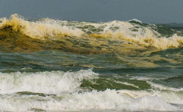 חוף פלמחים, הבוקר (צילום: משה קוסטי)