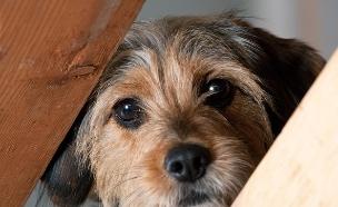 כלב חמוד מפוחד (צילום: shutterstock ,מעריב לנוער)
