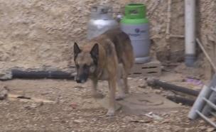 לוקי הכלב המשטרתי (צילום: משטרת ישראל ,משטרת ישראל)