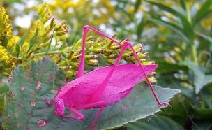 חיות צבעוניות (צילום: צילום מסך ,מעריב לנוער)