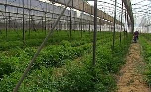 היעדר המגנזיום פוגע גם בצמחים (צילום: חדשות 2)