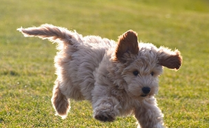 כלב פלאפי (צילום: mashable ,מעריב לנוער)