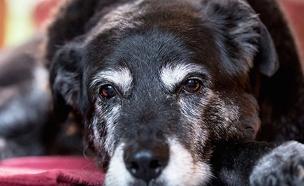 מאגי, הכלבה הזקנה בעולם(מעריב לנוער)