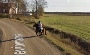 סוס בגוגל (צילום: גוגל ,גוגל)