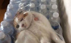 חתולים כושלים(מעריב לנוער)