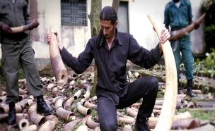 מסע בעקבות המאבק בסחר בבעלי חיים
