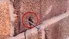 דבורה נגד מסמר (צילום: יוטיוב)