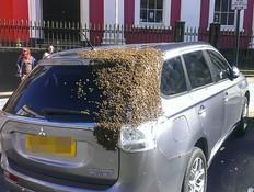 נחיל דבורים (צילום: מרקורי)