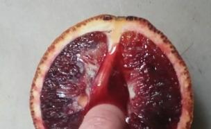 תפוז דם (צילום: מתוך האינסטגרם של Stephanie Sarley)