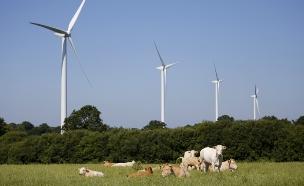 חוות הדעת הסותרות על הטמנת קו החשמל (צילום: רויטרס)