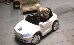 שי-צו ב-BMW (צילום: אינסטגרם ,מעריב לנוער)